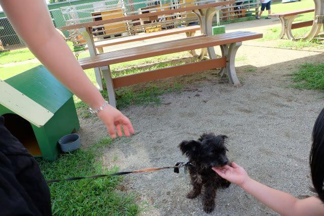 犬と触れ合い